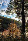 Backlit Riverside Trees by Carolyn  Fletcher