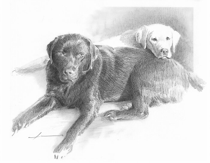 Labrador friends drawing by Mike Theuer