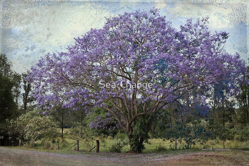 The Jacaranda Tree by Sea-Change
