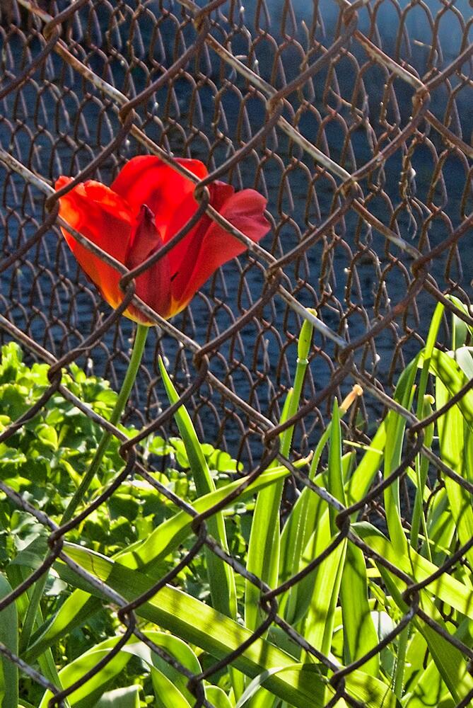 Red Flower by Joy  Rector
