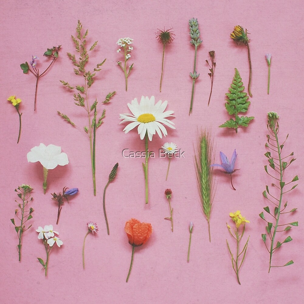 Wild Flowers by Cassia Beck