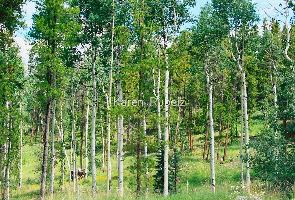 Country Roads and Aspen Groves by Karen  Rubeiz