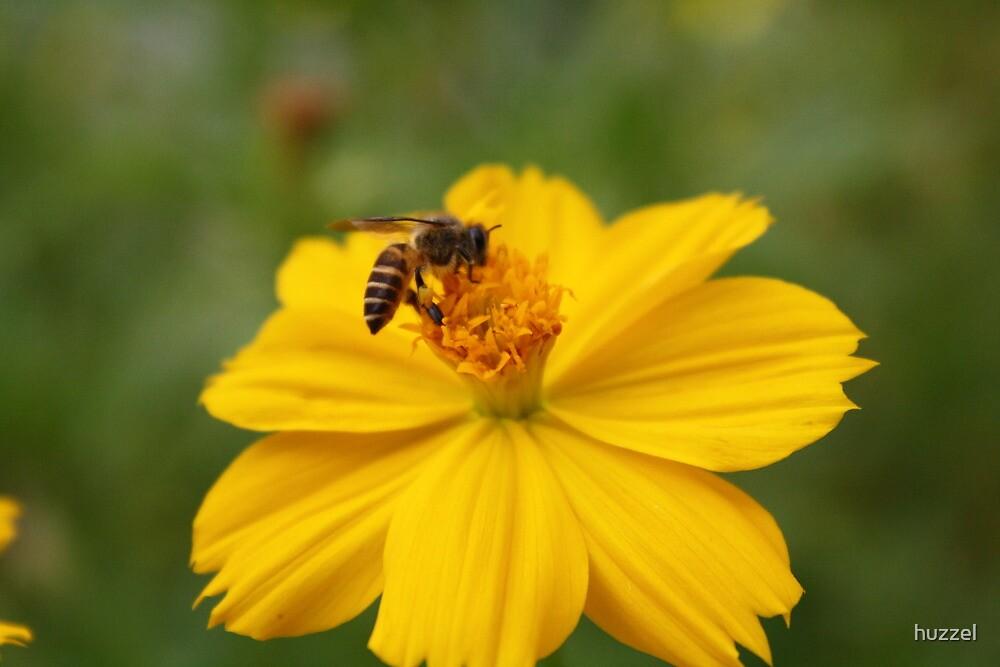 Busy Bee by huzzel