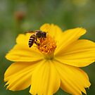 Busy Bee by huzzel