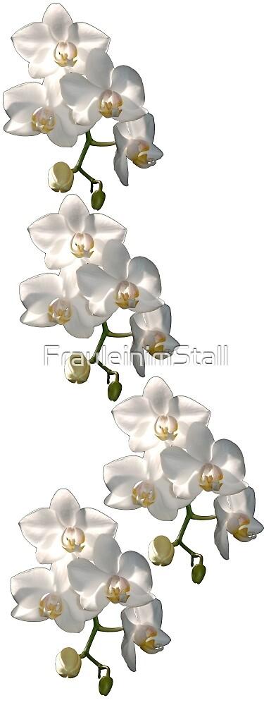 Orchid border by FrauleinimStall