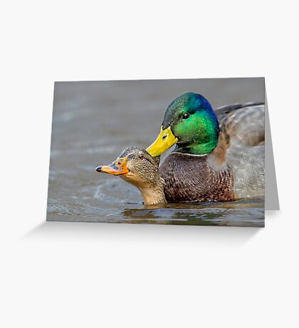 What's Up Duck! Greeting Card