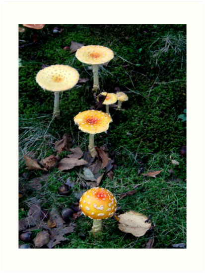 Amanita mushrooms by Nicole S. Moore