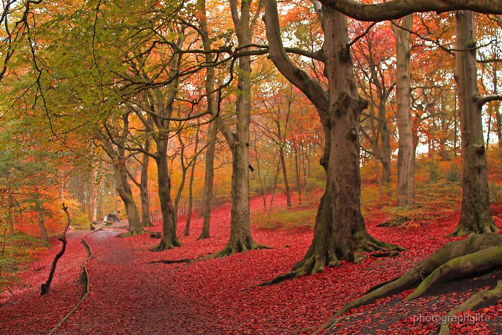 woodland scene by photographylife
