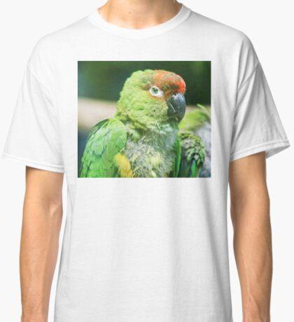 Nanday Parakeet Classic T-Shirt