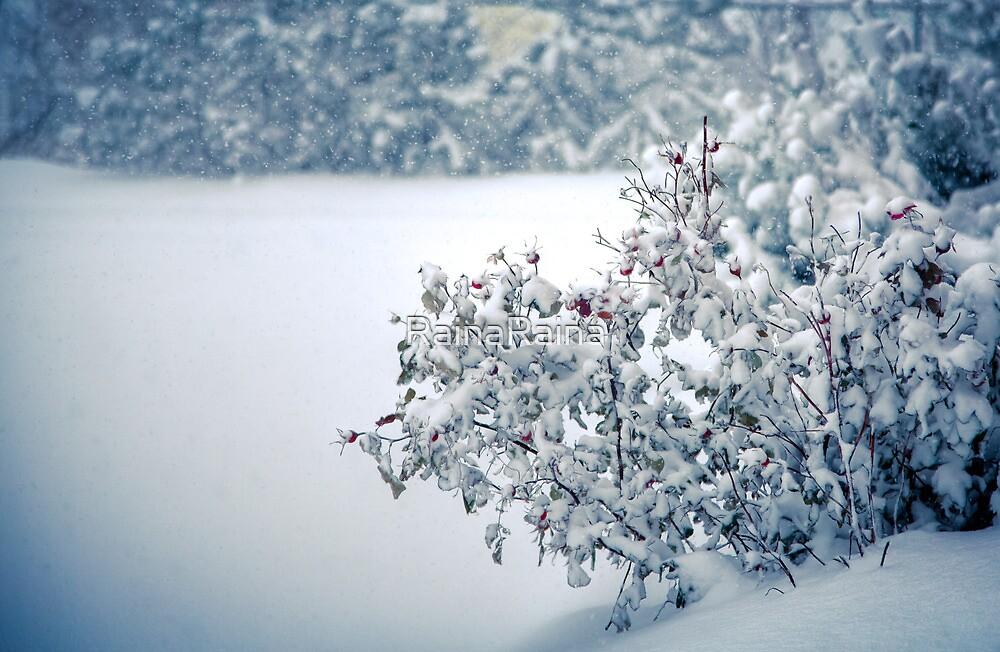 First Snowfall by RainaRaina