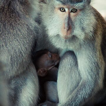 Mommy monkey by halans