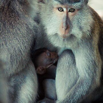 Mommy monkey by halans