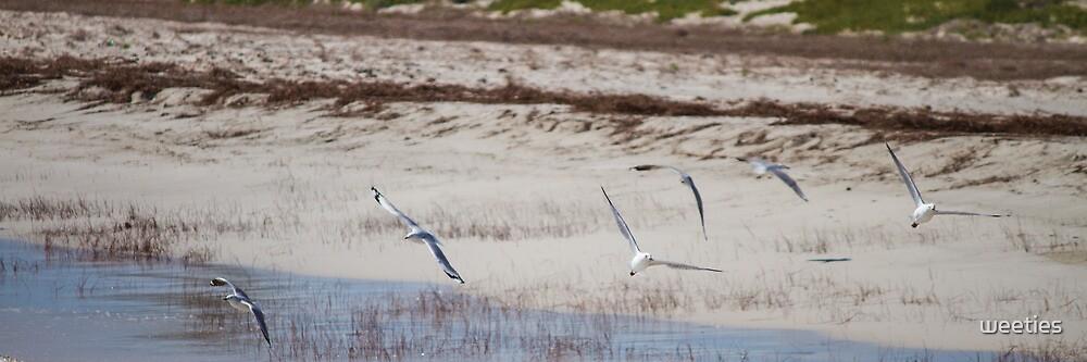 Seagulls by weeties