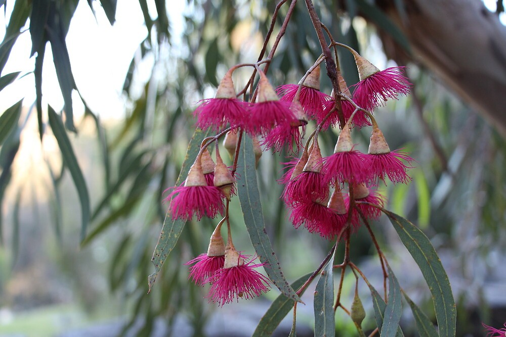 Flowering gum by tessavance