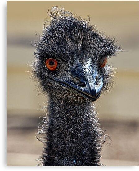 Oh, Those Emu Eyes! by CarolM