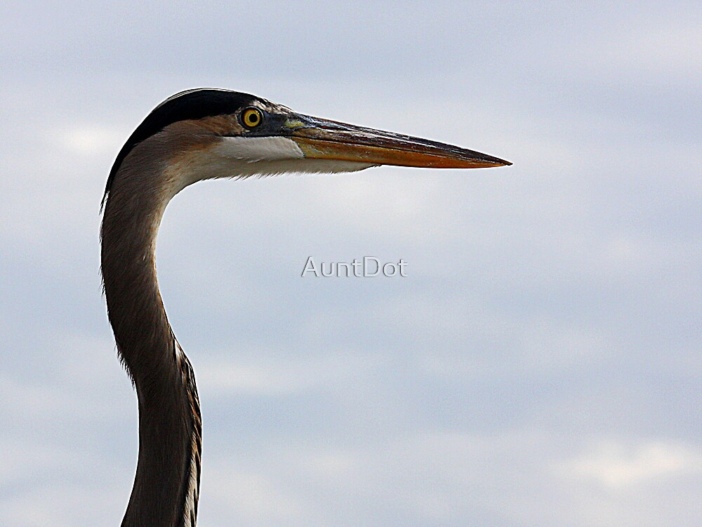Graceful Heron by AuntDot