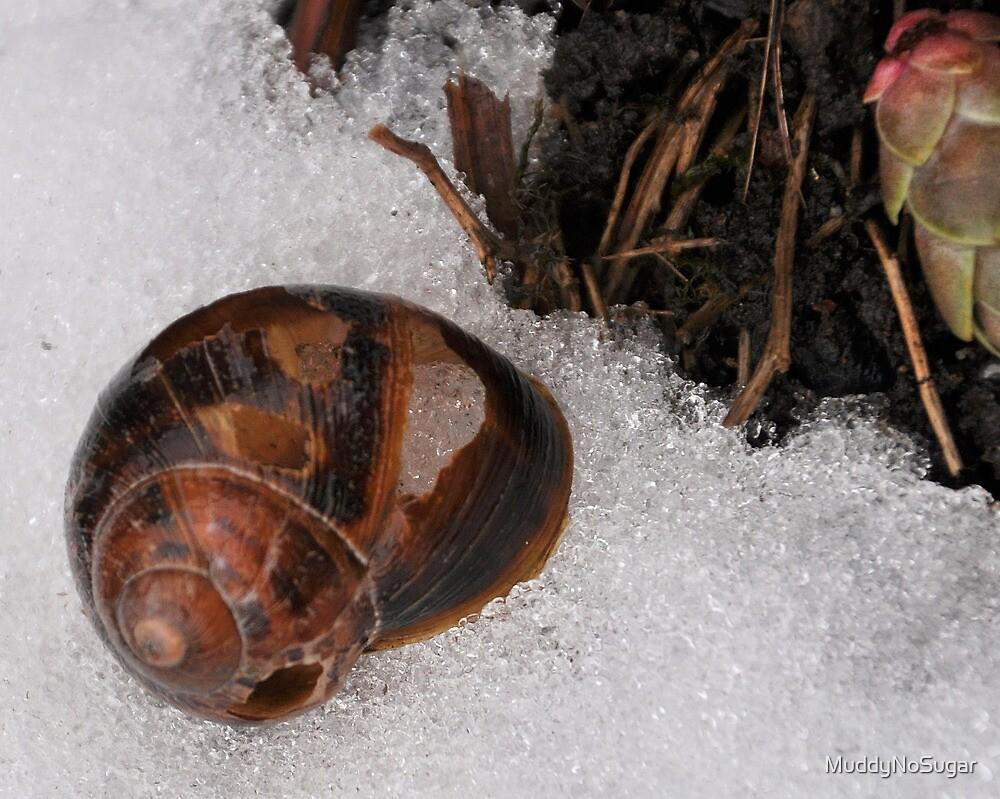Cold Snail by MuddyNoSugar