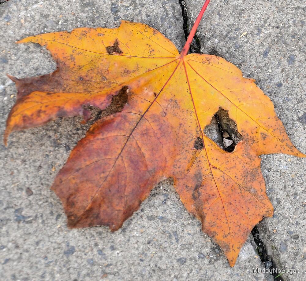 Autumn Leaf by MuddyNoSugar