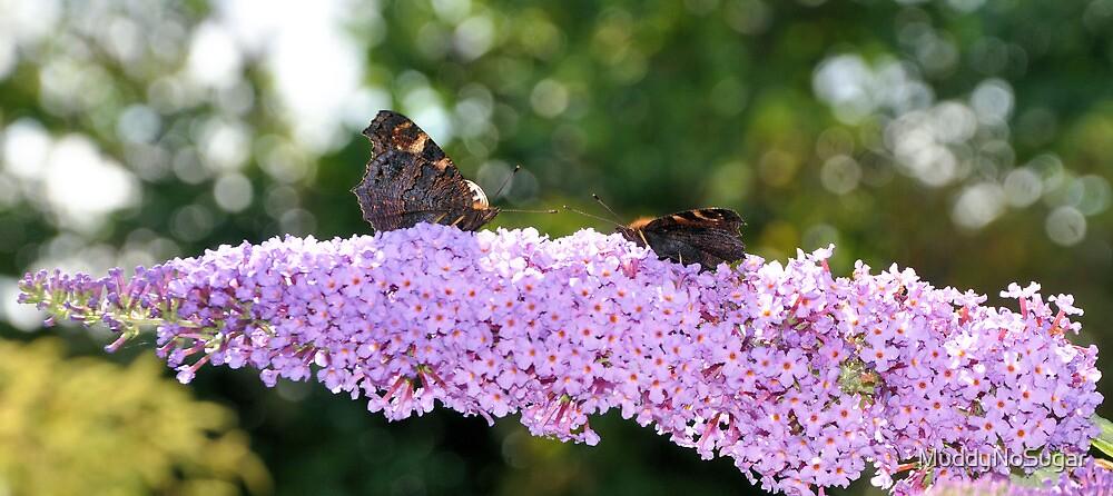 Butterflies by MuddyNoSugar