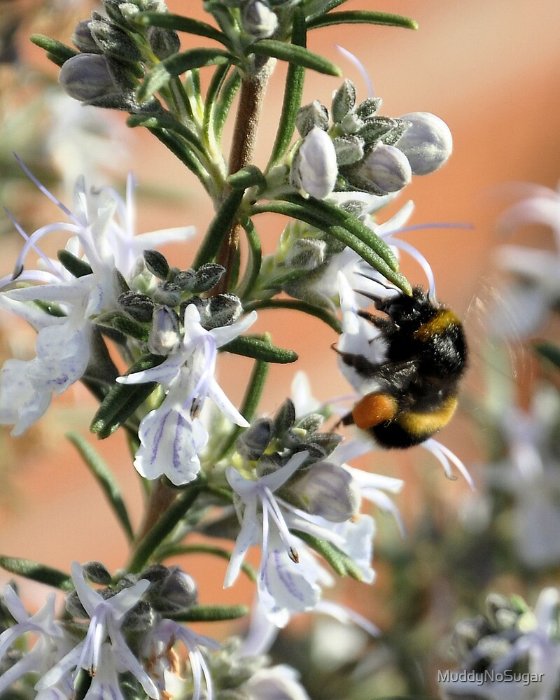 Bee Hugging the Rosemary by MuddyNoSugar