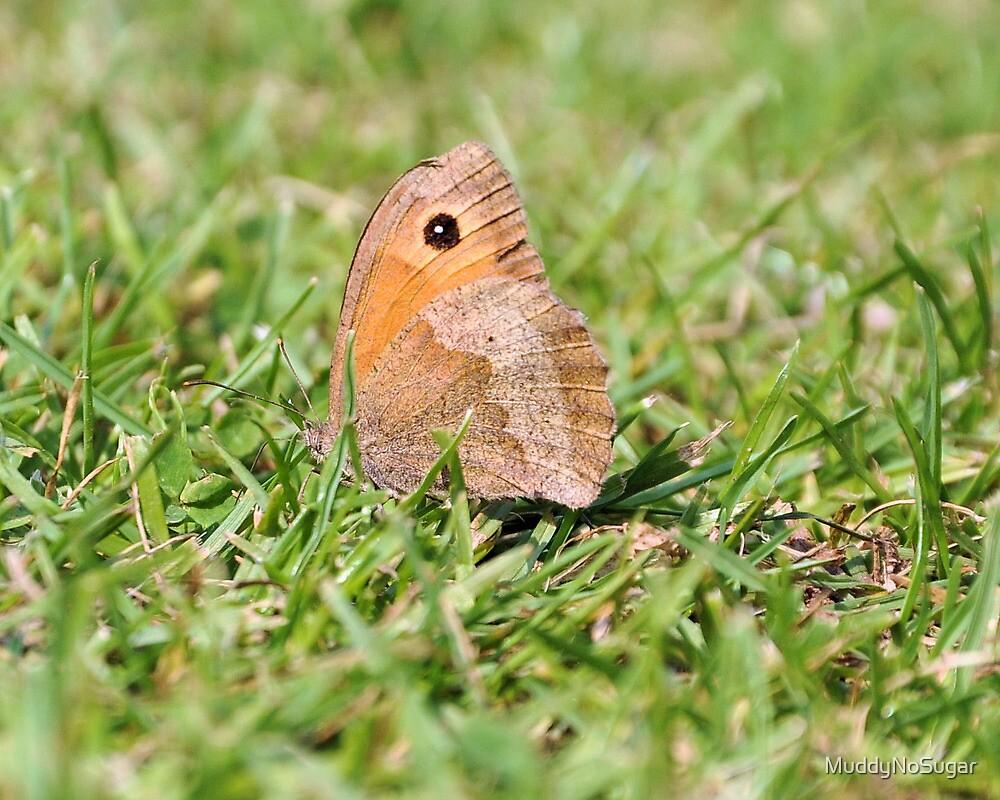 Butterfly by MuddyNoSugar