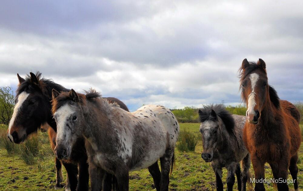 The Horses by MuddyNoSugar