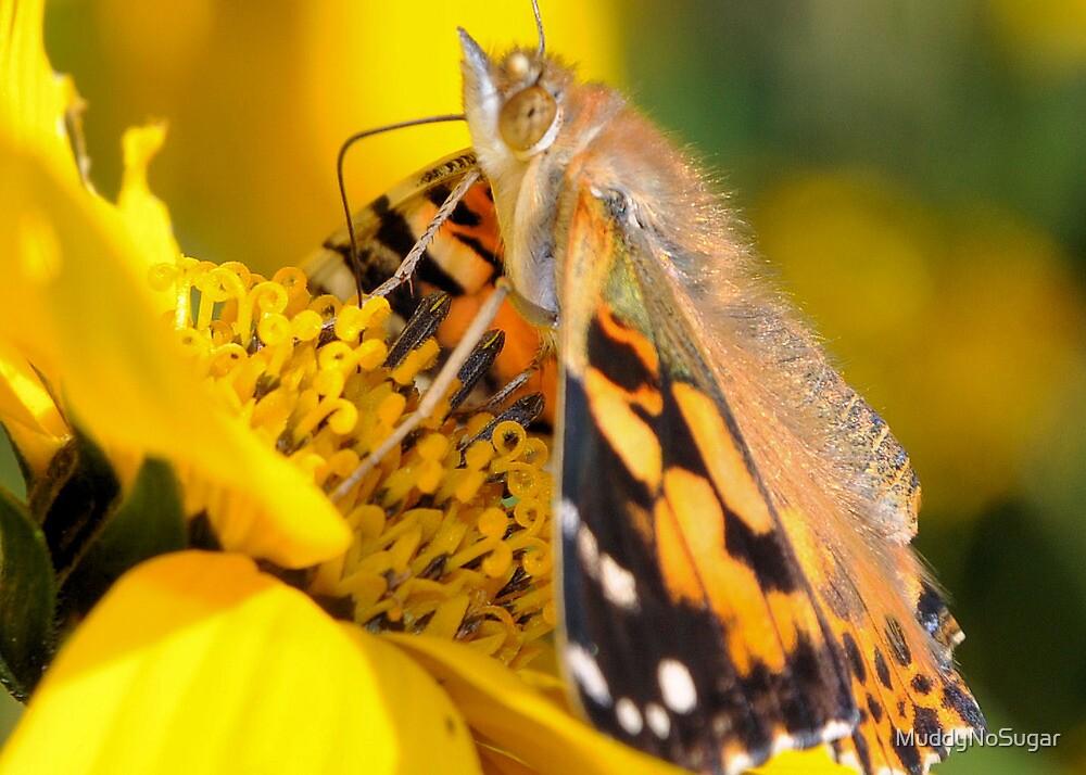 Butterfly (2) by MuddyNoSugar