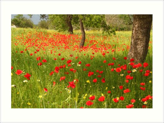 Beautiful IBIZA Poppy Fields forever von Hungaro