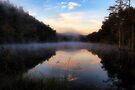 Misty Morning by Carolyn  Fletcher