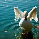 Wings by amrita125