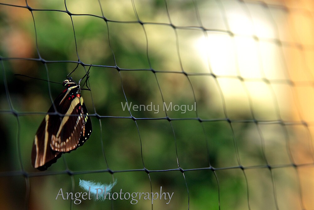 Nothing But Net by Wendy Mogul