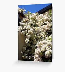 Bougainvillea -  10 11 12 Greeting Card