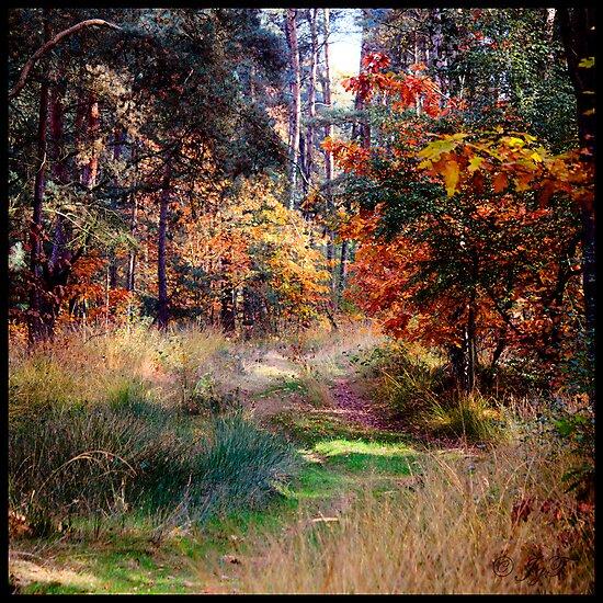 Woodlands by johnjgt