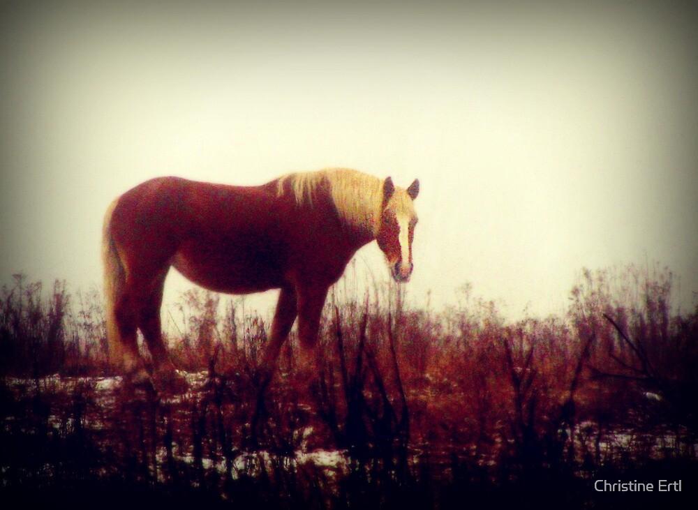 Amish Belgian in Fog by Christine Ertl