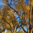 Crazy Golden Tree Sky by Bo Insogna