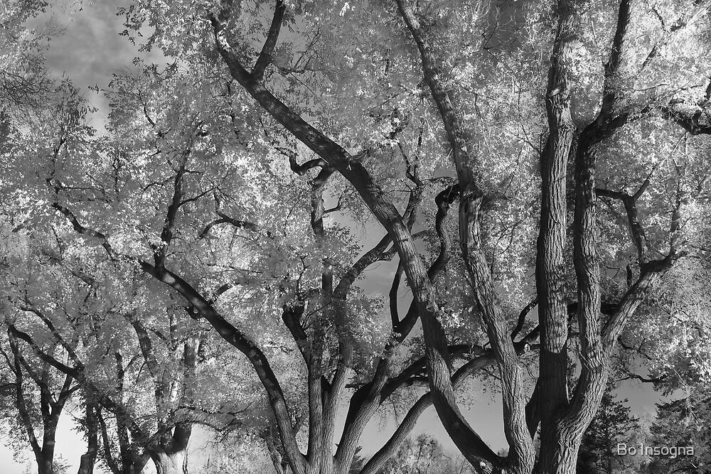 Crazy Tree Sky by Bo Insogna