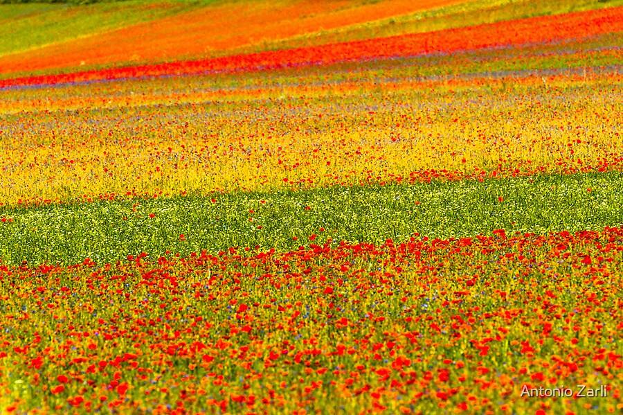 Colors by Antonio Zarli