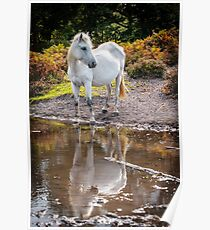Horse Magic in reflection Poster