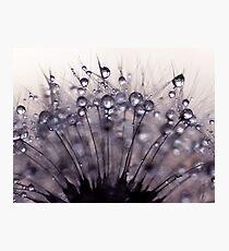 droplets of mauve Photographic Print