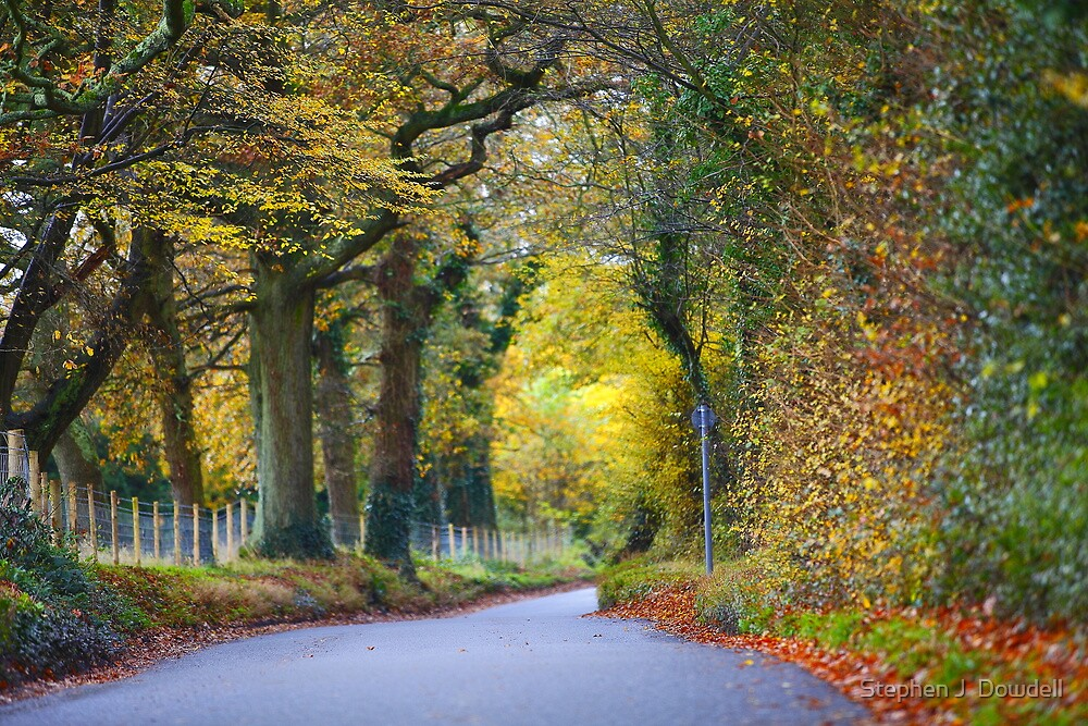 Autumn Road by Stephen J  Dowdell