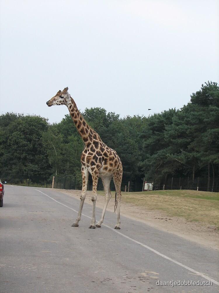 Giraffe taking a stroll by daantjedubbledutch