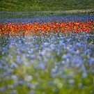 Floral stripes by Roberto Bettacchi