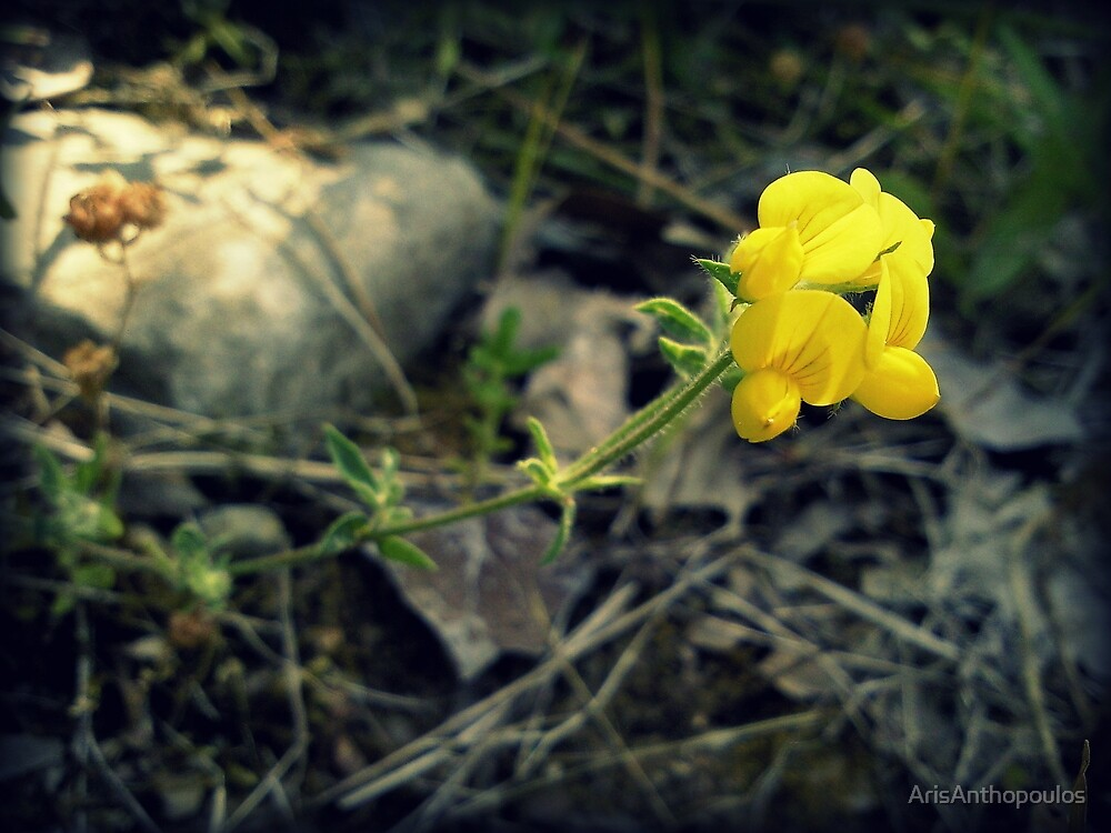 wild flowers of Greek nature by ArisAnthopoulos