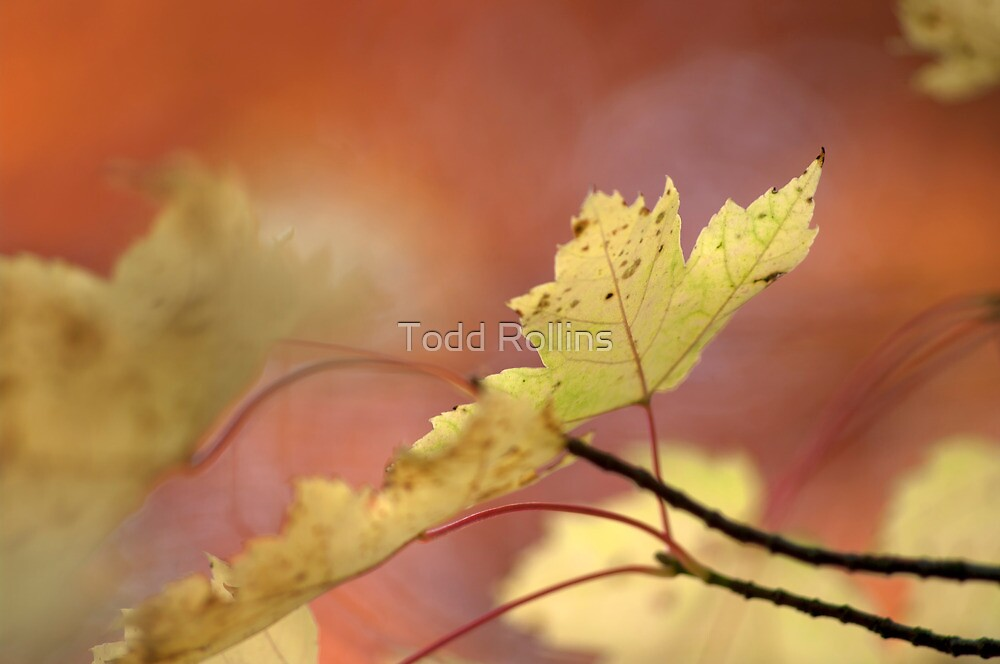 Portland In Fall.  by Todd Rollins