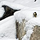 Hiker on snowy cliff by Dan Phelps
