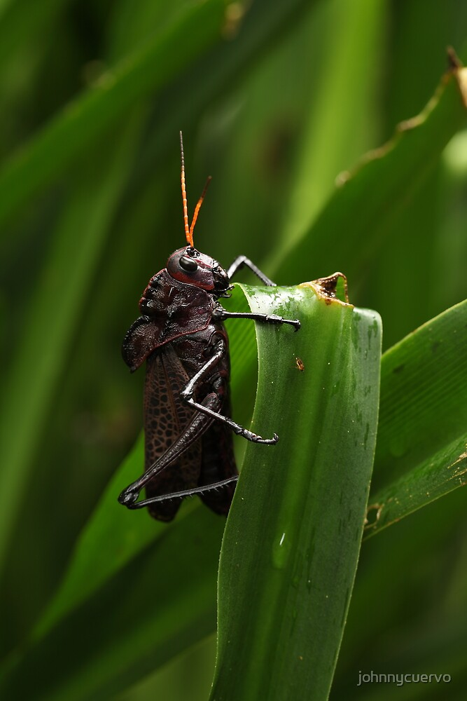 Grasshopper: after the rain by johnnycuervo