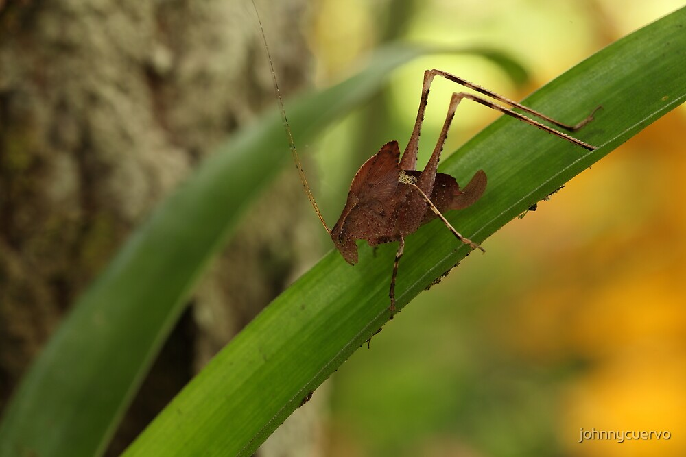 Grasshopper by johnnycuervo