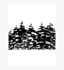 Pines Laden with Snow  Photographic Print
