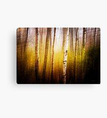 Magic Birch Canvas Print