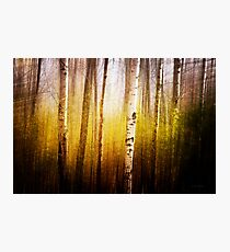 Magic Birch Photographic Print